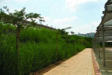 landscape sa 2006 04 mtn6 MTN